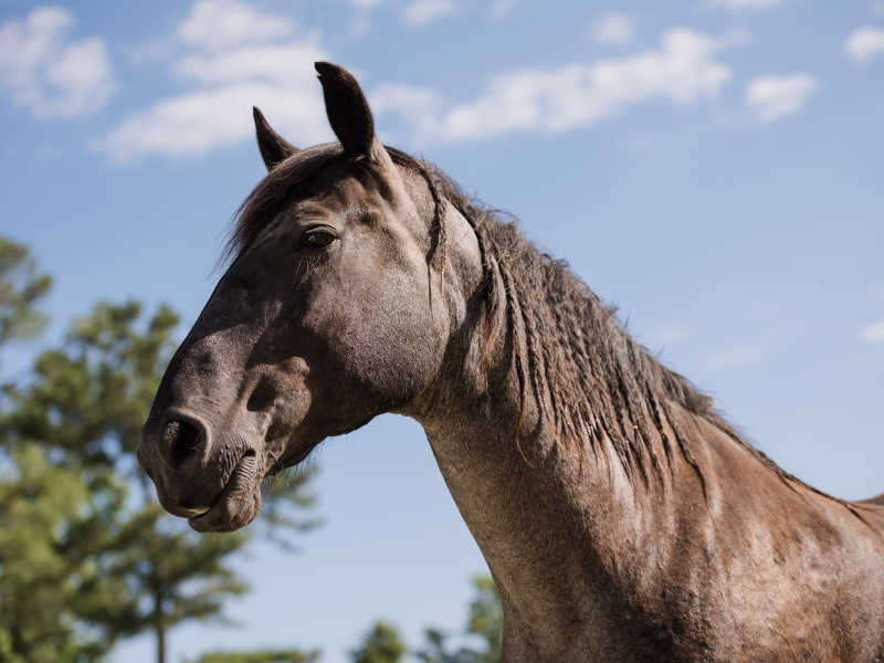 Hope Reins - Horse Stories - Ruka 800x600